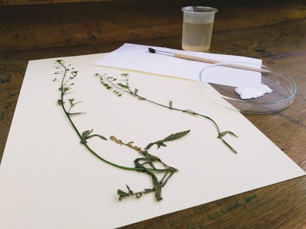 Formação Construir um Herbário de Plantas Medicinais